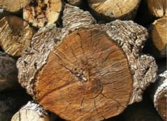 什么是阴沉木,又该如何鉴别它的真伪?