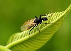 你知道家里快速灭蚂蚁的方法吗?