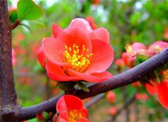 腊梅花的图片及其种植方法
