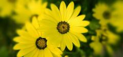 太阳花的花语是什么,你都造吗?
