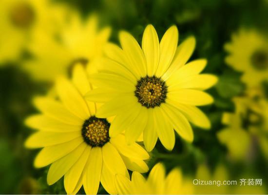 太阳花的花语是什么