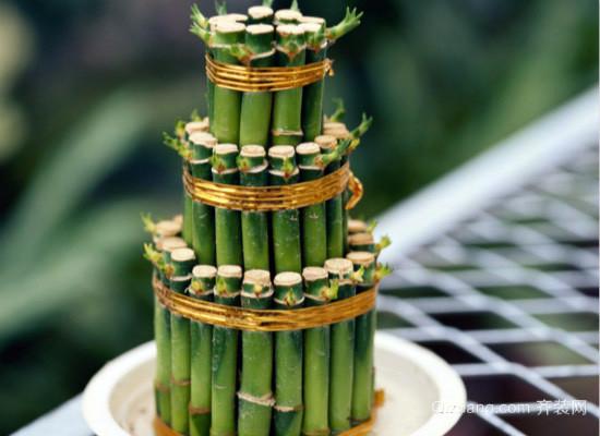 富贵竹的养殖
