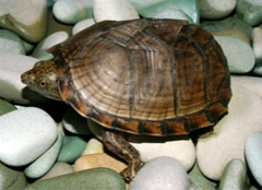 你知道乌龟该怎么养吗?