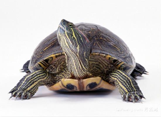 乌龟怎么养