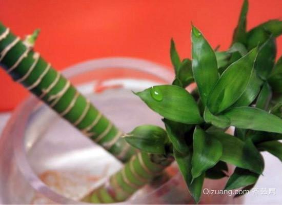 水养富贵竹怎么养