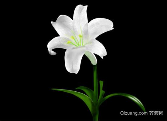 百合花的花语