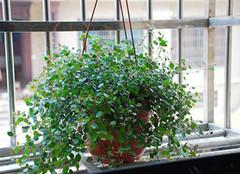 常见的室内净化空气植物有哪些?
