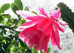 养殖凤尾花,在夏日带给你清凉之感