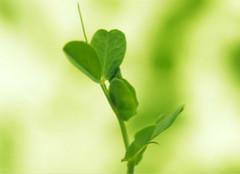 家里面摆放一些绿色植物有什么作用