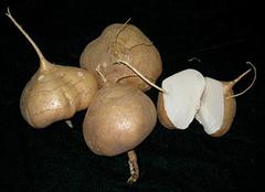 豆薯富含丰富维生素C味道香甜甘脆