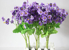 风铃花花语以及养植方法