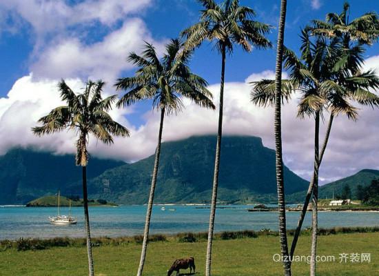 椰子树的资料