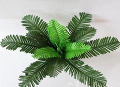 你知道铁树叶的功效与作用是什么吗?