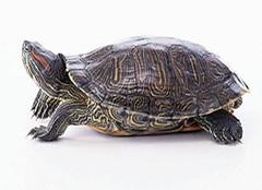 乌龟眼病怎么治疗?