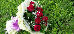 听说表白成功只需要一朵玫瑰花