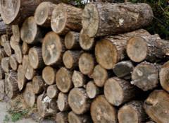 橡胶木:让环保伴随一生