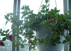 绿植装扮卧室 家居亲近自然