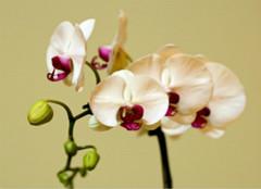哪些室内植物不能养?以防健康没保障