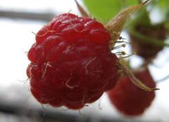 红梅的功效 美食与身体都不辜负