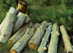 橡胶木PK橡木 哪种才是你的真爱?