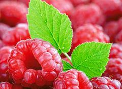 食用红莓 酸甜可口功效大