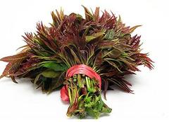 香椿子:便宜又有营养的木本蔬菜