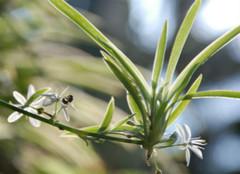 植物PK甲醛:还你一个自然家居