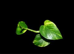 财位植物选不好?难怪你会走霉运