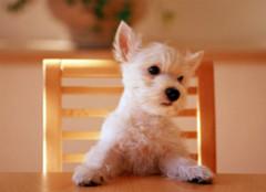 宠物也会影响人的财运风水?