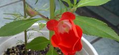 掌握茶花养殖技巧 开出最美的花朵