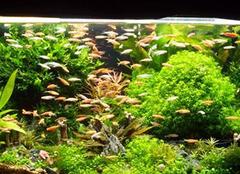 鱼缸造景 为家居平添一道风景线