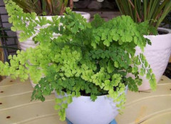 装修后放这些植物 为新家吸醛服务