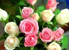 科普:玫瑰和月季的区别