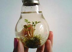 废旧灯泡大改造 制作灯泡植物美化家居