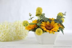 阳台盆栽菊花如何枝繁叶茂?阳台盆栽菊花的栽培方法