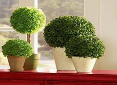 这么好养的室内植物您家入了吗?