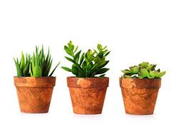 室内盆栽植物的挑选方法您都烂熟于心了吗?