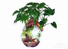 水培植物营养液怎么用?水培植物营养液自制操作方法大全