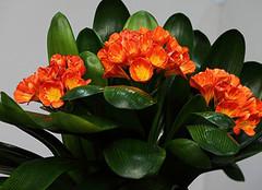 常见的三种室内绿色植物盆栽养殖方法大全你还不知道吗?