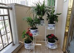 家居欧式铁艺花架设计效果图 带你发现不一样的美