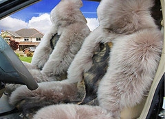 汽车羊毛坐垫的清洗方法您知道吗?