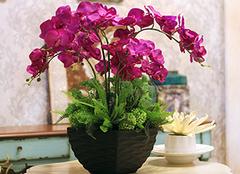 蝴蝶兰的养殖方法和五大注意事项