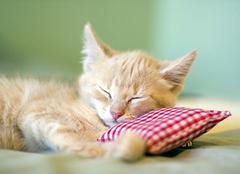 怎样科学睡眠 科学睡眠几个小关键