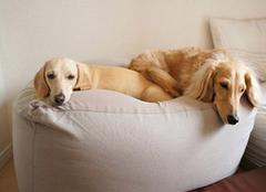 懒人沙发搭配小常识