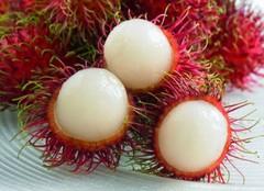 红毛丹种植方法介绍 红毛丹田间管理注意事项