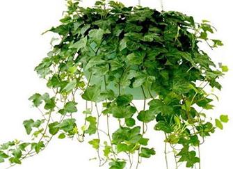装修除甲醛方法 植物除甲醛介绍
