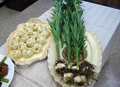 百合花种植方法 百合花球怎么种植