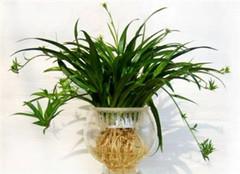 如何挑选、制作属于你的水培植物?