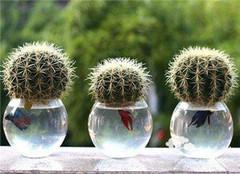 水培植物用水知识 还不赶紧来学学