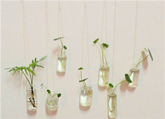 水培植物营养液配置的操作规程及注意事项